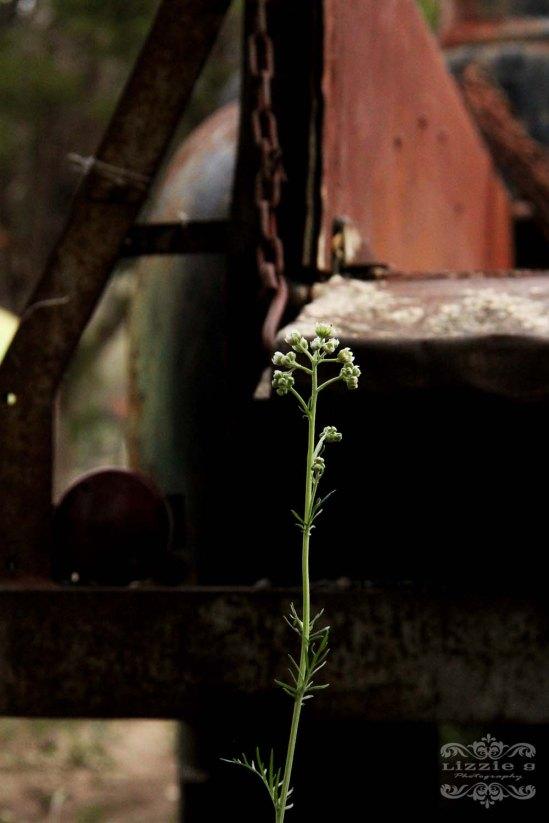 wild flowers-LS-28